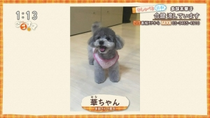 tabemikako_gogonama20170413_0026.jpg
