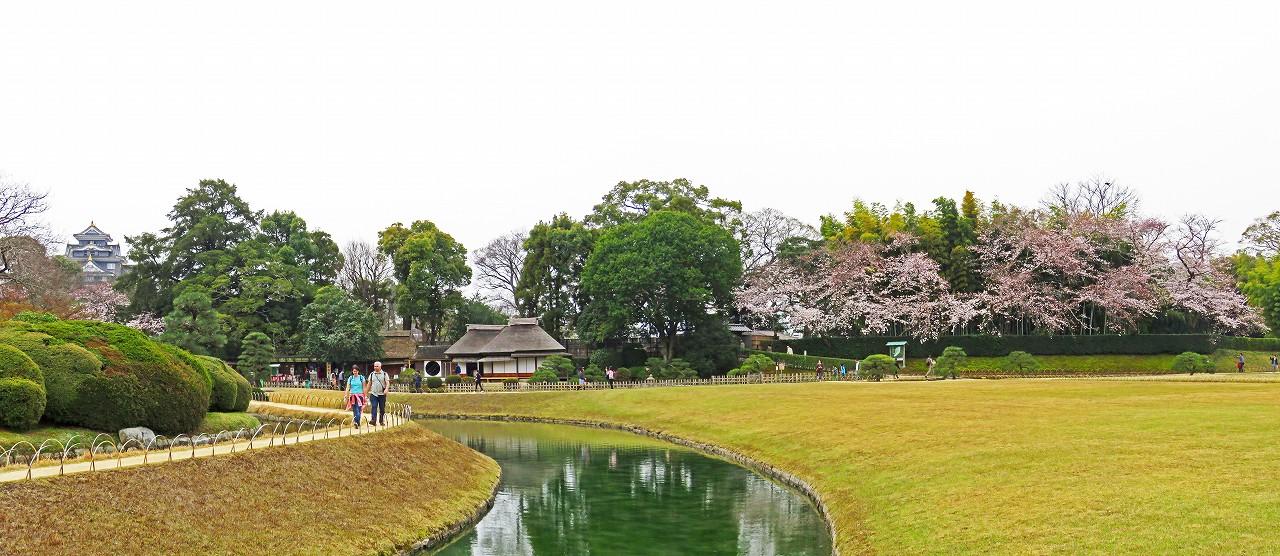20170405 後楽園今日の園内土橋付近から眺めた桜の様子ワイド風景 (1)