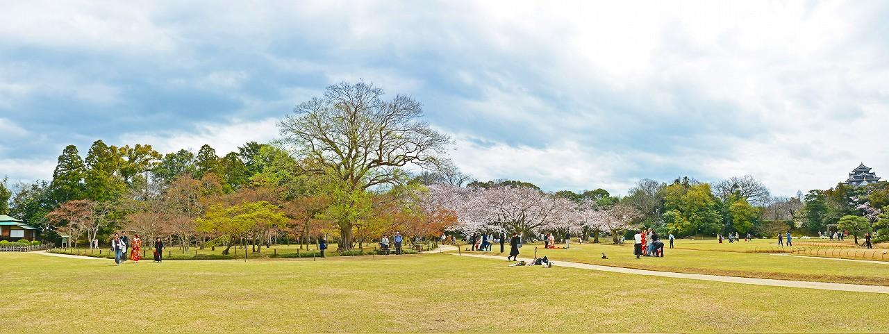 20170406 後楽園今日のイベント広場から眺めた千入の森と桜林の様子ワイド風景 (1)