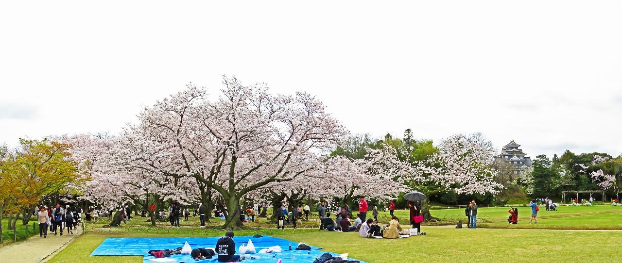 20170409 後楽園今日の桜林の桜の様子ワイド風景 (1)
