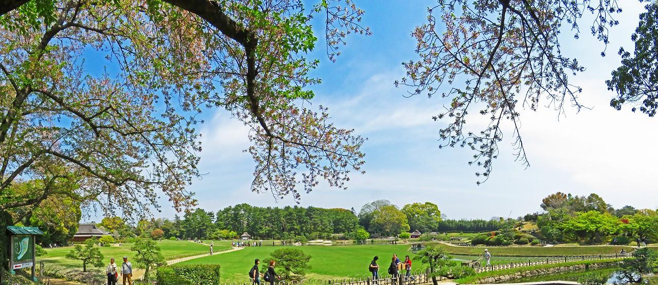20170416 後楽園今日の南門を入って直ぐの場所から眺めた園内ワイド風景 (1)