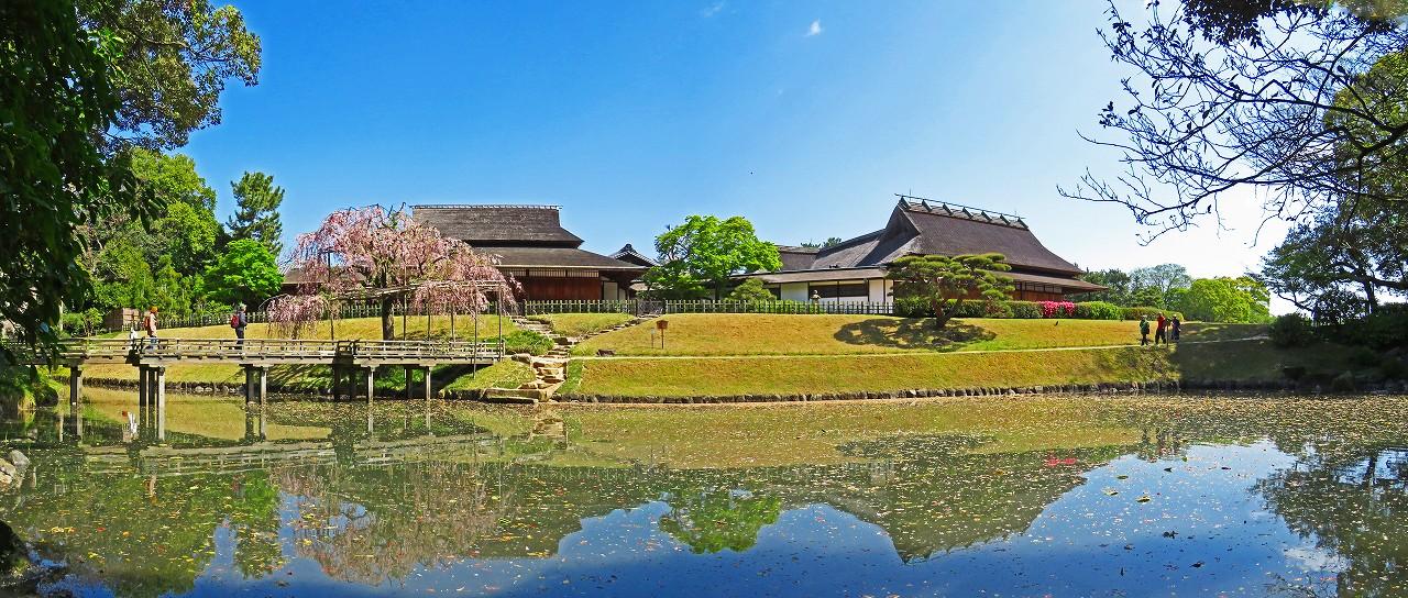 20170419 後楽園今日の花葉の池の枝垂れ桜の様子ワイド風景 (1)