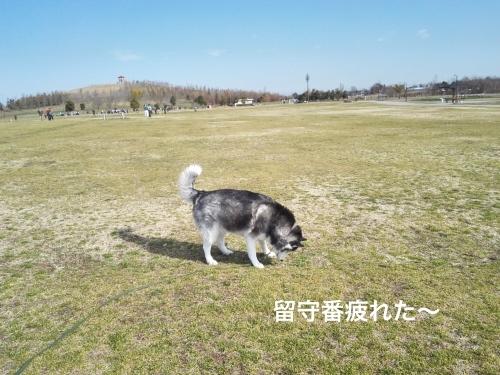 IMG_20170304_091320_Fotor.jpg