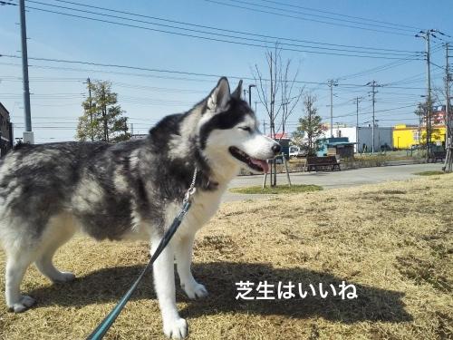 IMG_20170325_103159_Fotor.jpg