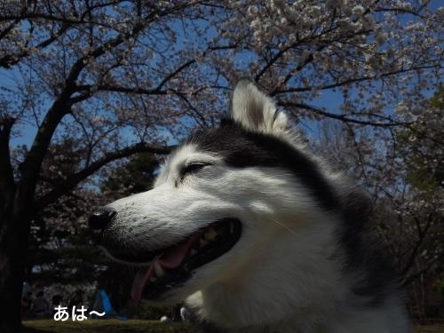 IMG_20170405_121745_Fotor.jpg