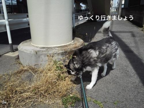 IMG_20170416_120814_Fotor.jpg
