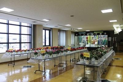 余市紅志高校 アザレア即売会2017-02-15 (1)