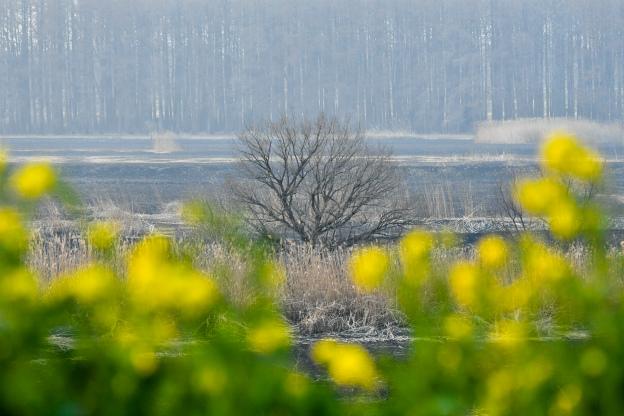 ヨシ焼きの後の渡良瀬風景