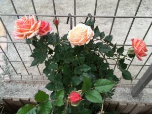 fc2blog_20170408223848451.jpg