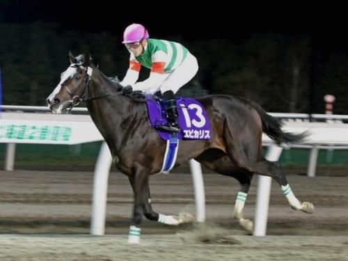 【競馬ネタ】エピリカスはドバイWCや凱旋門賞やBCクラシックを勝てるかもしれないくらいの100年に1頭の名馬やと思う