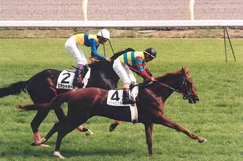 【競馬ネタ】今朝大発見したんだけど、アで始まってトで終わる馬は絶対に活躍する件