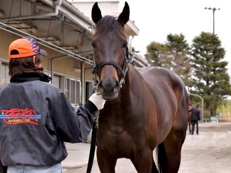 【弥生賞】コマノインパルス6着。今さらだけど「京成杯馬」ってあり得ないくらい弱いよね