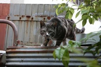 庭へ侵入しようとやってきた野良猫