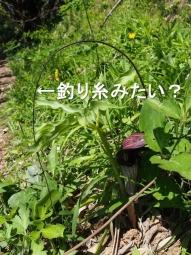 ninohama_329_convert_20170424071615.jpg