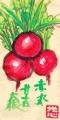 3絵手紙野菜 (2)