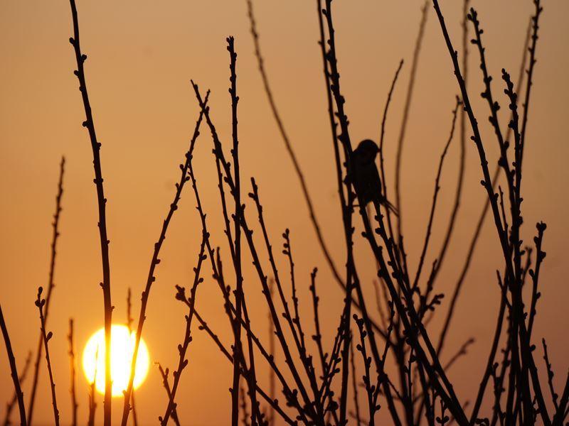 朝日とメジロ