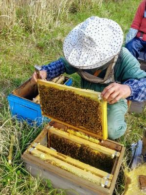 養蜂風景2017②