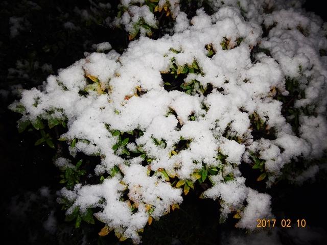 DSC08101雪が降る
