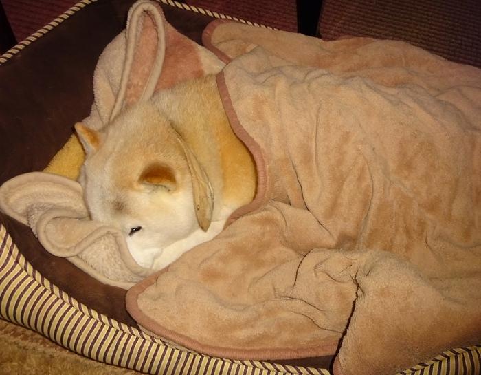 DSC08156毛布を掛けて寝るカノン3