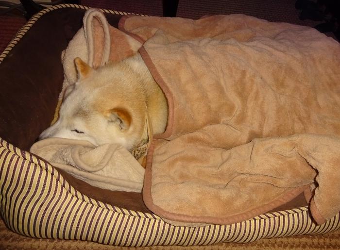 DSC08155毛布を掛けて寝るカノン2