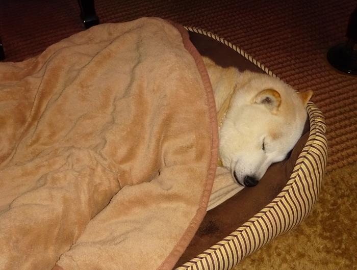 DSC08153毛布を掛けて寝るカノン1