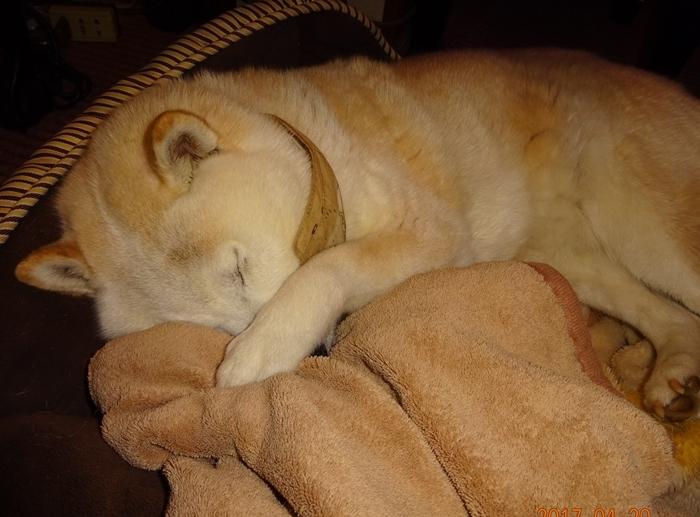 DSC08591かわいい寝顔のカノン
