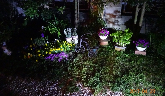 DSC08589私の庭夜