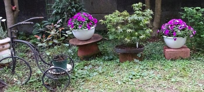 DSC08546私の庭自転車
