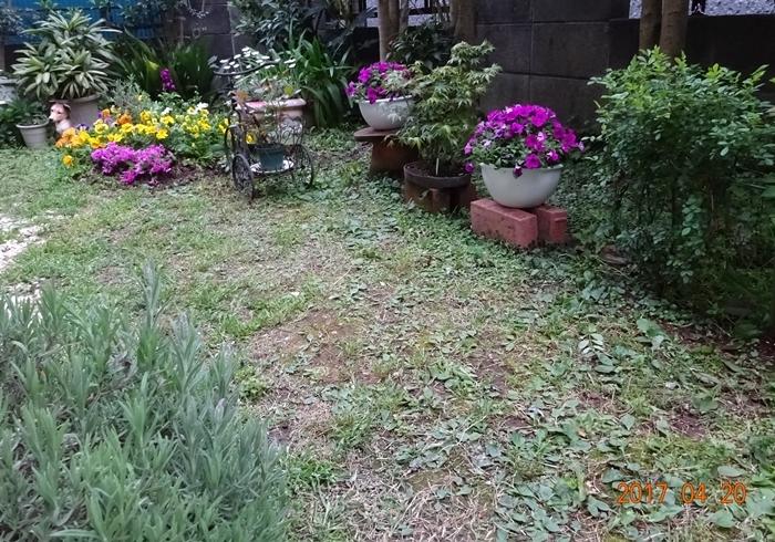 DSC08548私の庭昼