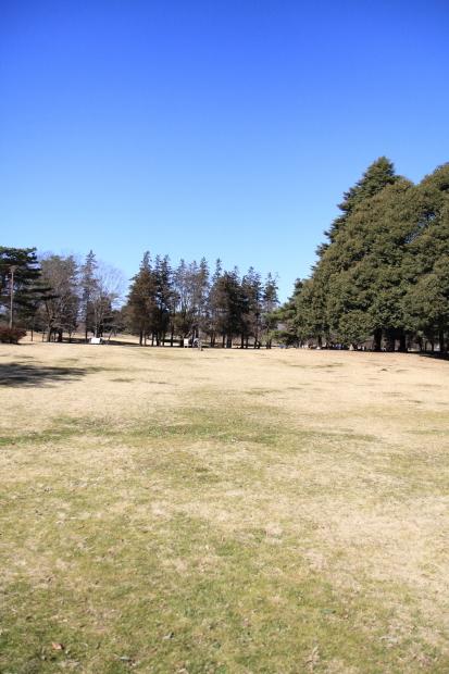 野川公園00005423