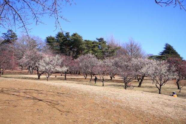 野川公園00005408