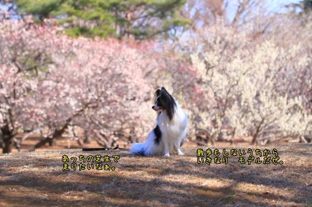 野川公園00005451