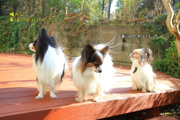 風が強い00005551