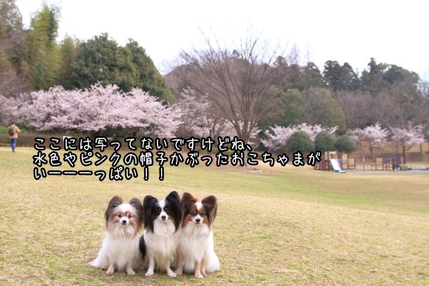 玉縄桜201700006666