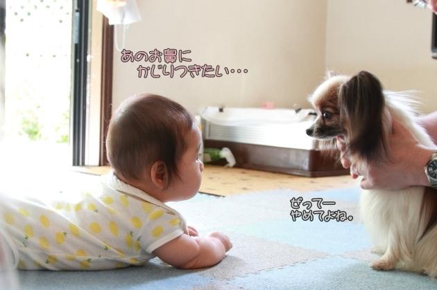 IMG_7679子供の日由梨ちゃん