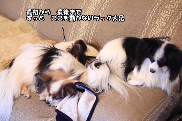 ソファの犬00007333