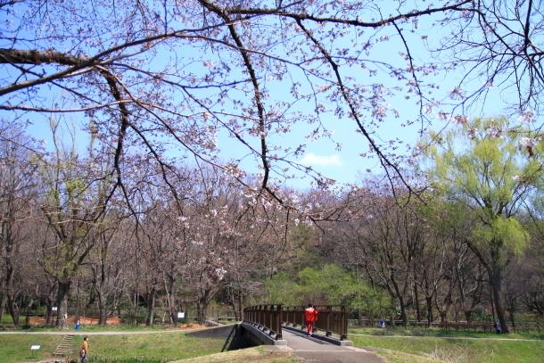 野川公園 お花見00009436