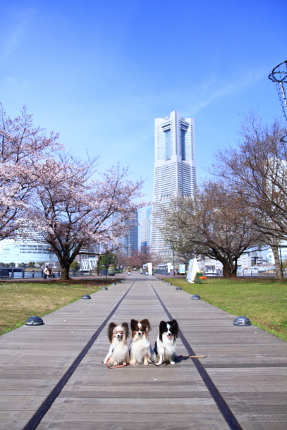 横浜 お花いっぱい蓮ちゃん00009707