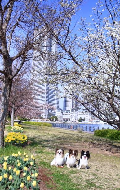 横浜 お花いっぱい蓮ちゃん00009712