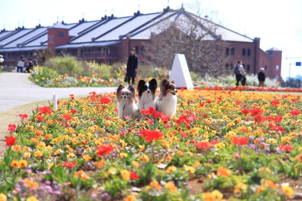 横浜 お花いっぱい蓮ちゃん00009747