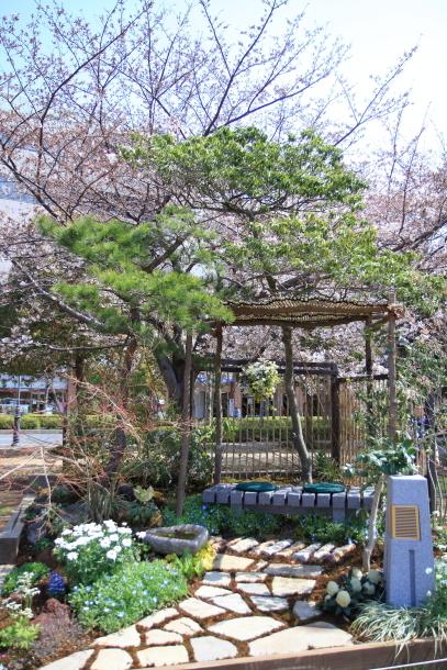 横浜 お花いっぱい蓮ちゃん00009736
