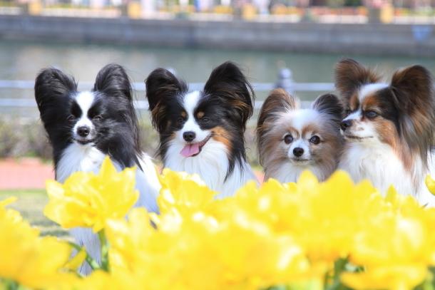横浜 お花いっぱい蓮ちゃん00009715