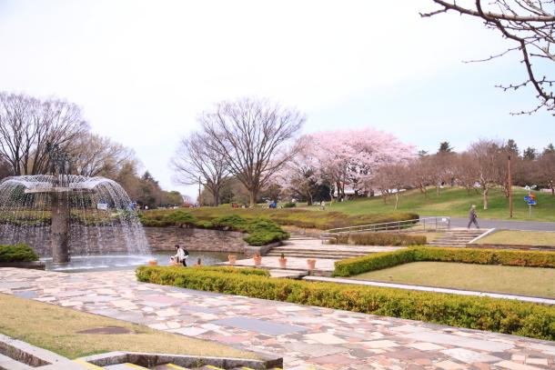 満開の桜00010820