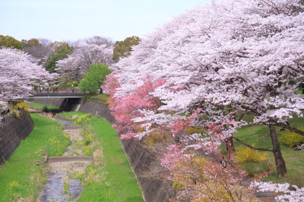 満開の桜00010824