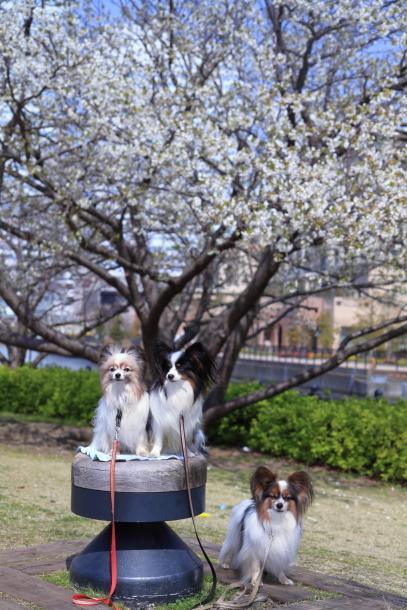 横浜 お花いっぱい蓮ちゃん00009727