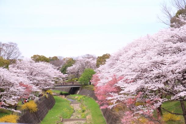 満開の桜00010822
