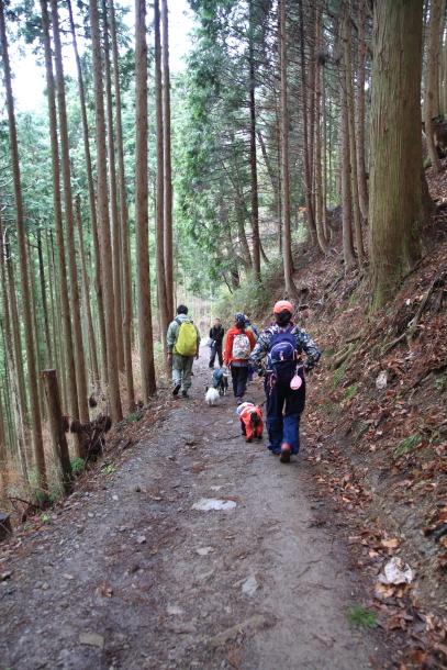 御岳山ハイキング00010680