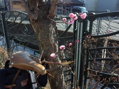 ゆるりポタ 早春の花