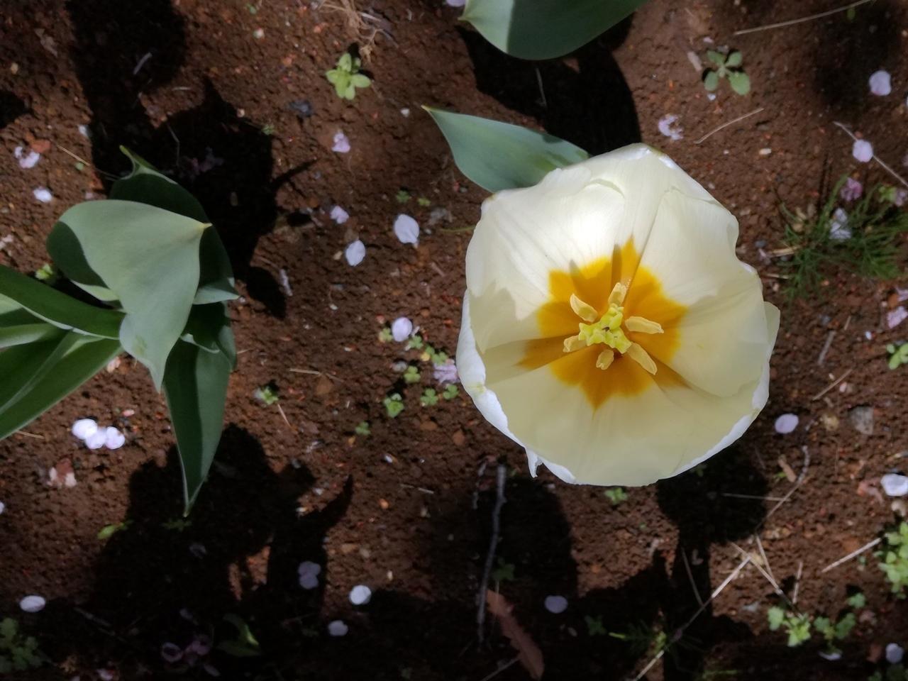 170412桜-07