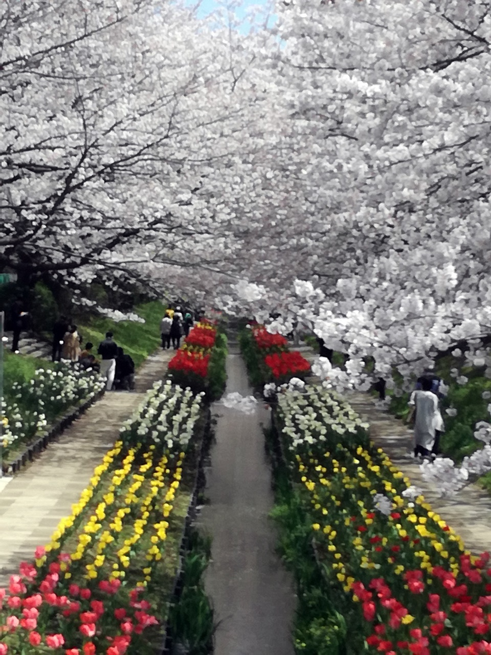 170412桜-08